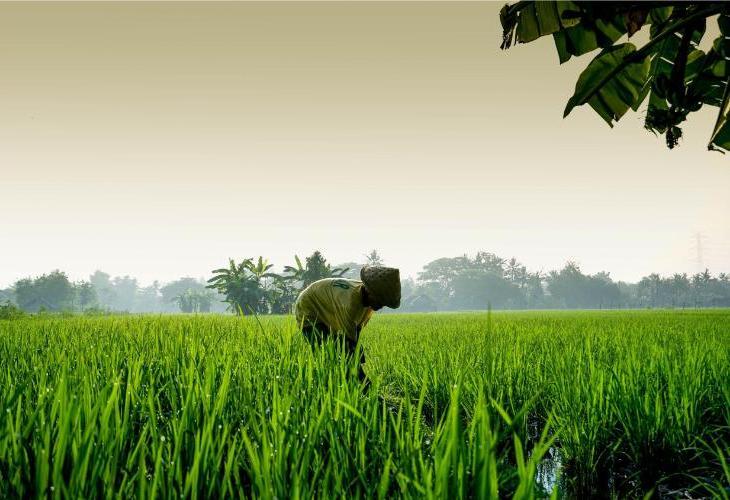 d Omah Yogyakarta