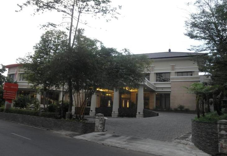 Oxalis Regency